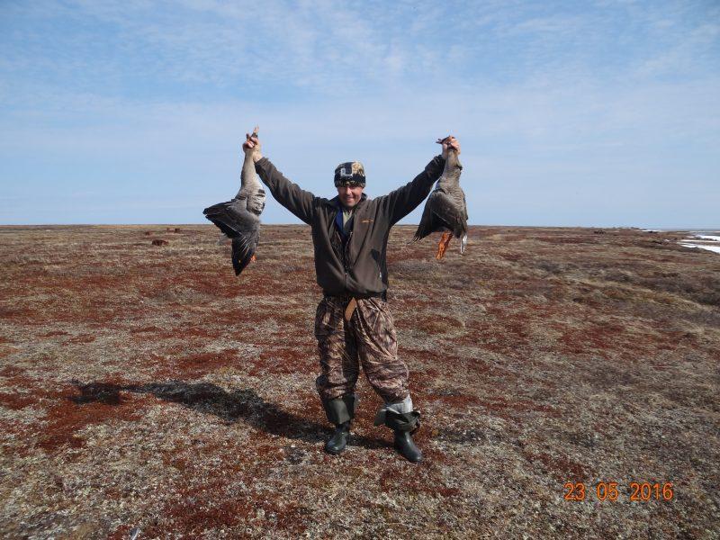 Охота на гуся в Заполярье! весна 2016!