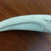 Профиль орла фрагмент рога косули 02 1000