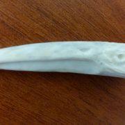 Профиль орла фрагмент рога косули 03 1000