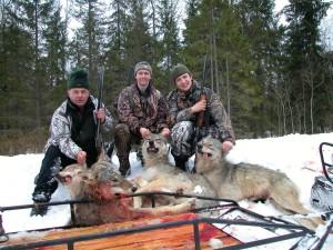 Wolf Волк 003