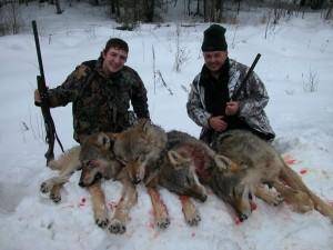 Wolf Волк 004