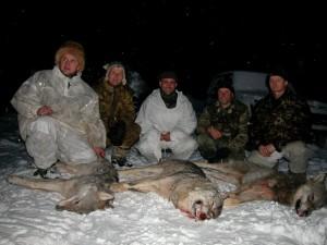 Wolf Волк 007