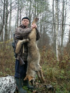 Wolf Волк 009