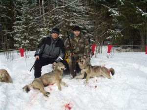 Wolf Волк 010
