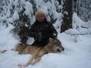 Wolf Волк 011