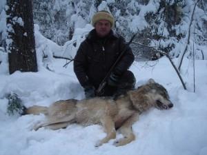 Wolf Волк 012