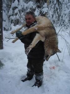 Wolf Волк 013