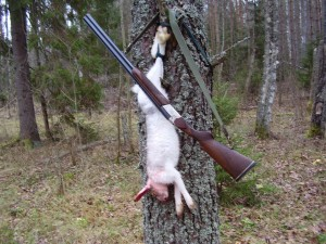 Hare Заяц 005