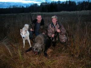 Wild boar Кабан 006