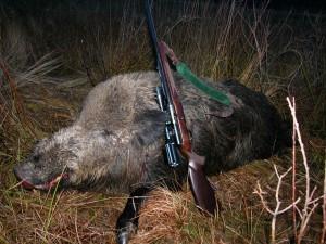 Wild boar Кабан 008