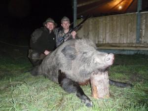 Wild boar Кабан 011