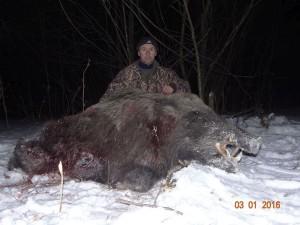 Wild boar Кабан 016