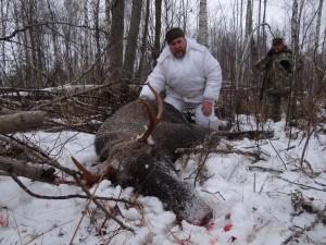 European Moose 003
