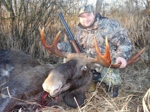 European Moose 004