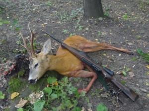 European roe deer Европейская косуля 004