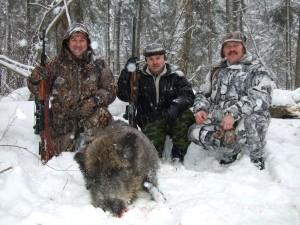 Wild boar Кабан 004