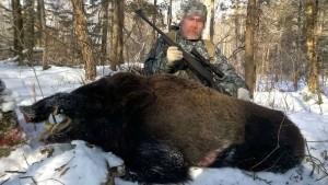Wild boar Кабан 017