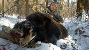 Wild boar Кабан 018