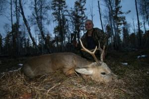 Siberian roe deer Сибирская косуля 006