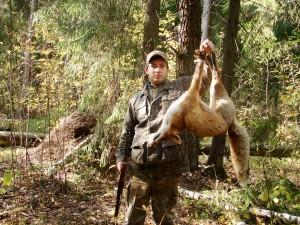 Fox Лисица 002