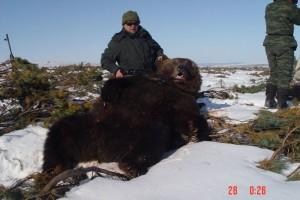Bear Медведь 004