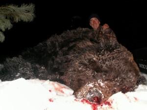 Bear Медведь 020