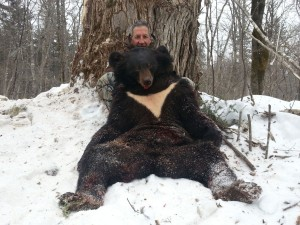 Bear Медведь 028
