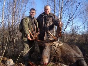 European Moose 006