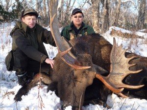 Kamchatka moose Лось 040