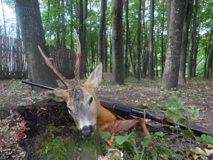 European roe deer Европейская косуля 002